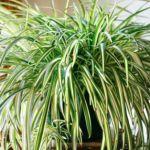 9 φυτά που θα φιλτράρουν τον αέρα του σπιτιού σας, χωρίς να δημιουργήσουν κινδύνους