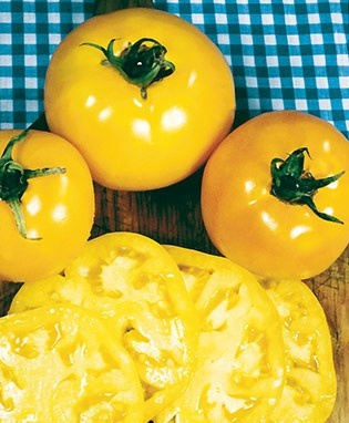 38 Best Images About Tomato Varieties On Pinterest 400 x 300