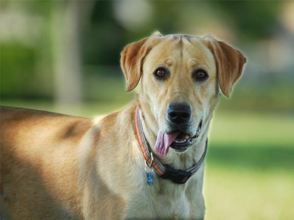 Enfermedad de Lyme en perros: síntomas y tratamiento