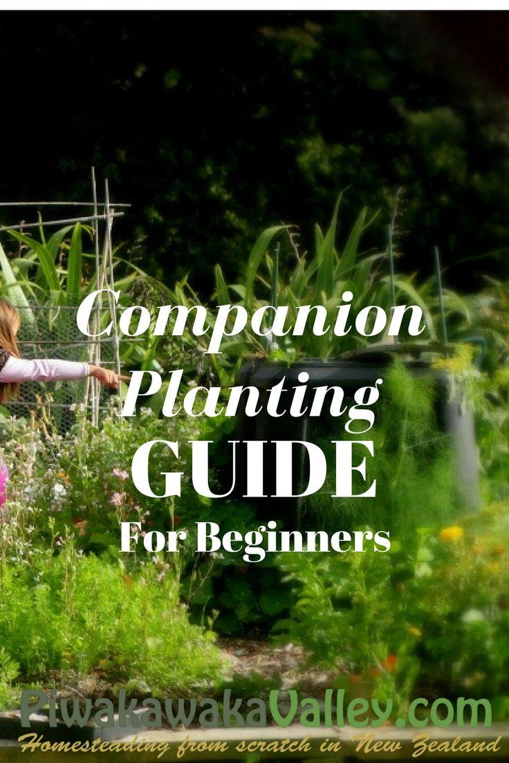 companion planting guide - Deckideen Nz