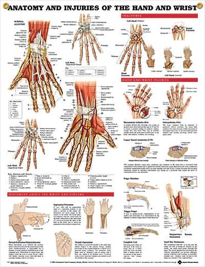 Anatomy and Injuries of the Hand and Wrist anatomy poster defines injuries like carpal tunnel, osteoarthritis, rheumatoid arthritis, finger maladies.