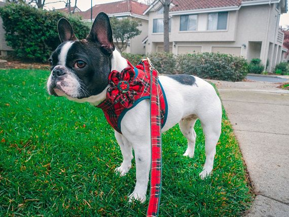 Red Pink Plaid Dog Harness Tartan Dog Harness Blue Boy Dog Dog
