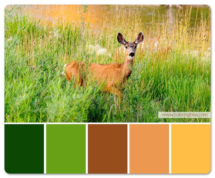 Deer In Field Color Palette Grayscale Coloring Grayscale