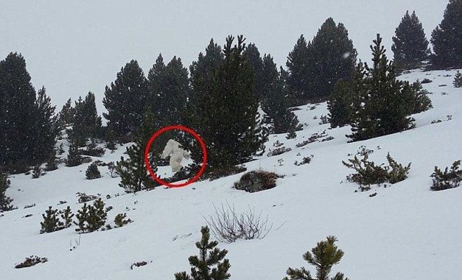 Skiers In Panic Over Bizarre Video Apparently Showing 'Real Life Yeti'