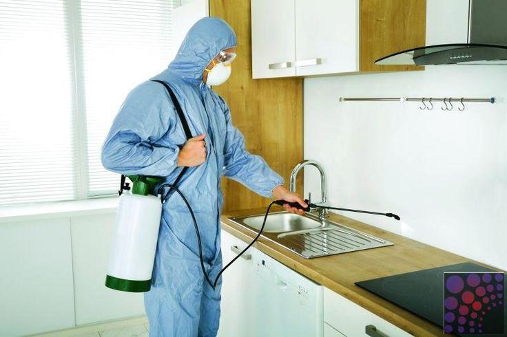 أفضل شركه تنظيف مباني ورش حشرات بالعين