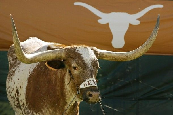 BEVO. I'm gonna own a longhorn one day when I have a ranch.