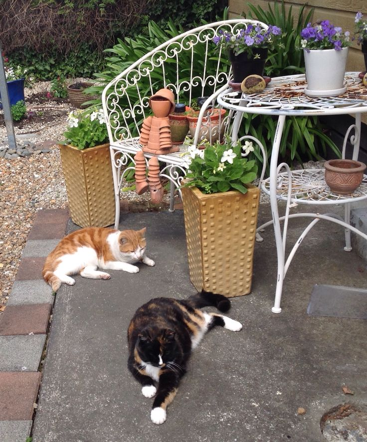 Ollie enjoying the sunshine (with Maggie, my Torti girl who sadly passed away February 2015)