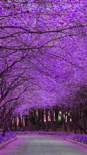 Oh so Purple