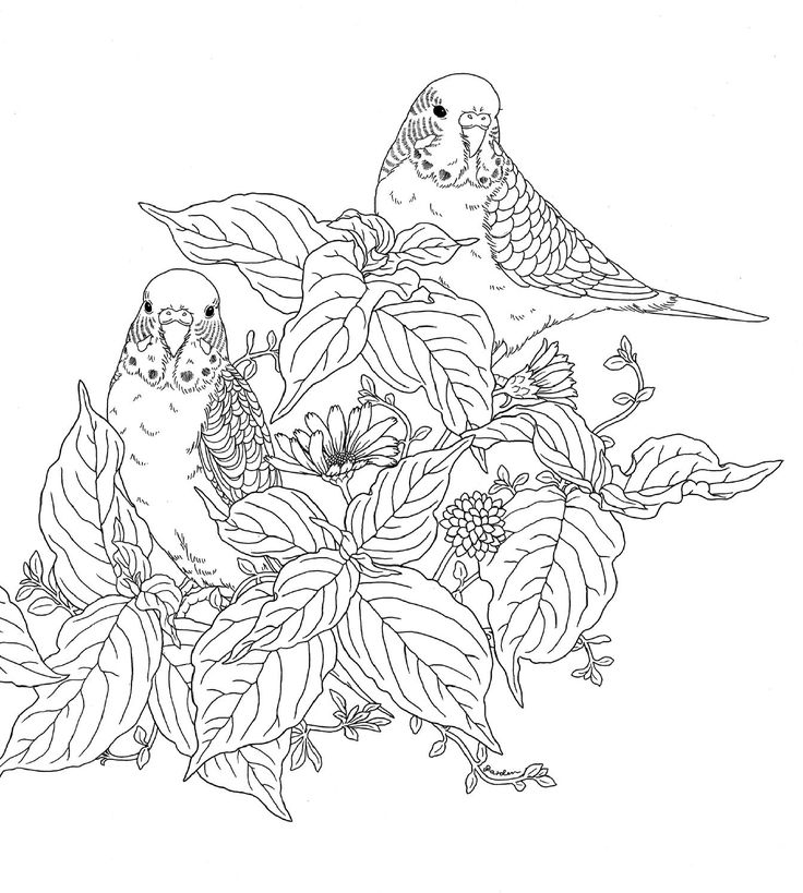 Harmony of Nature Adult Colouring Owls Birds