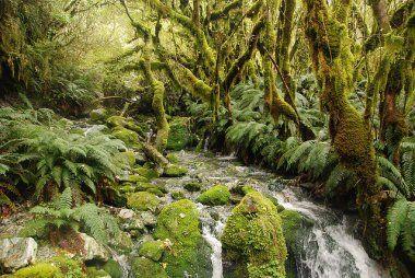Milford Track, Fiordland National Park, New Zealand.