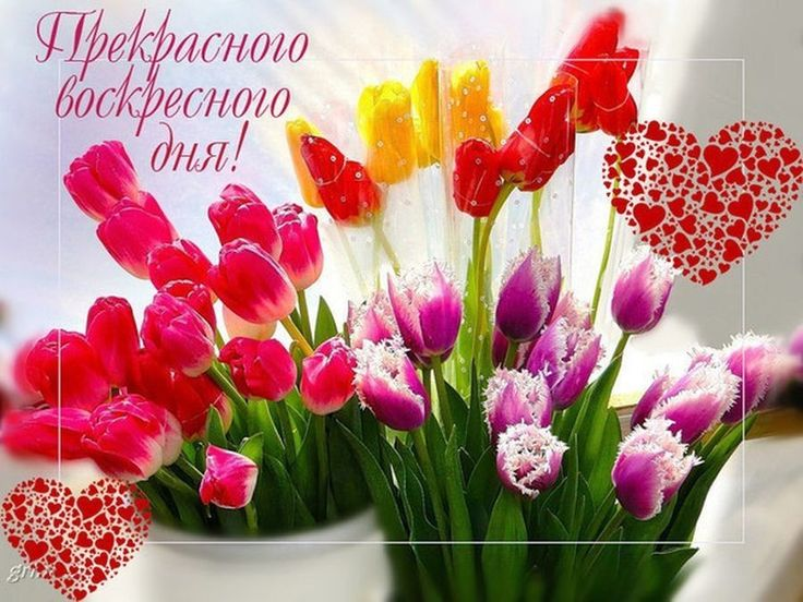 картинки с добрым воскресным днем яркий насыщенный