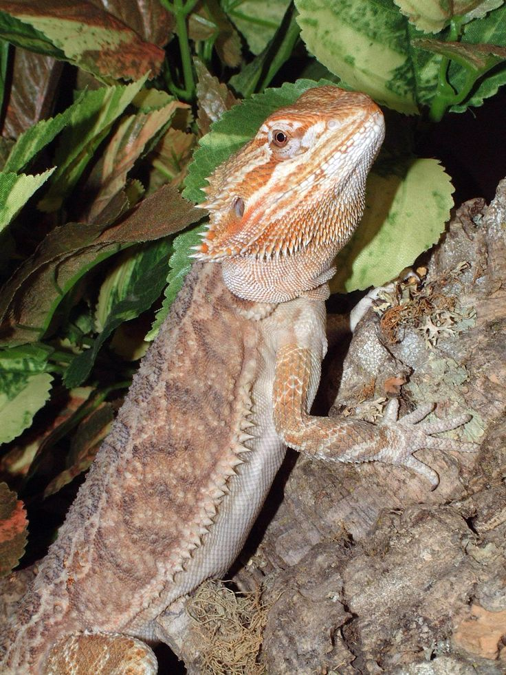 How To Feed Crickets To Your Bearded Dragons ... - YouTube