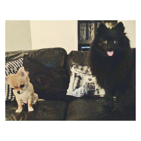 Me and my best friend Taika the chihuahua / Kleinspitz & Chihuahua