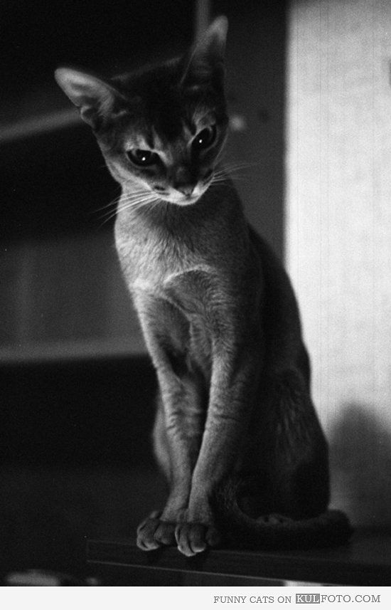 Beautiful beautiful beauuuutiful cat