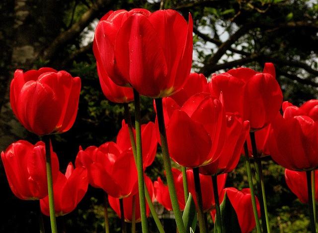 1000 images about my utah flower garden on pinterest winter bouquet