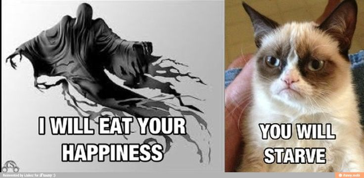 Nice Kitty...