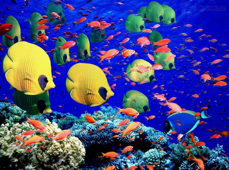Gran barrera de coral en Australia                                                                                                                                                                                 Más