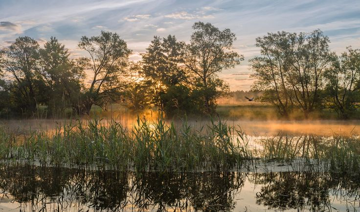 The first rays of sunrise on the river by Alexandr Bredikhin on 500px