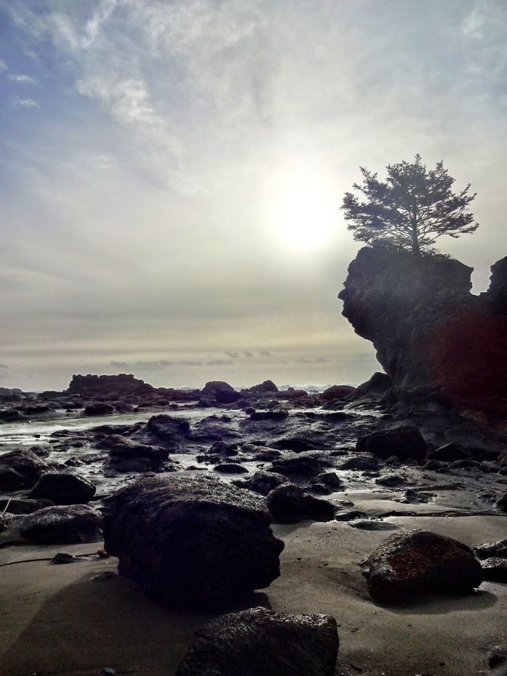 Your views from the West Coast Trail aren't as breathtaking as they used to be. | 21 Reasons You Won't Want To Visit British Columbia Right Now