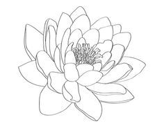 water lily shoulder tattoo - Google Search