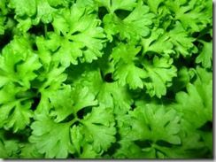 PARSLEY:  1. Parsley is rich in Vitamin B12, Vitamin C[1], Vitamin K, Vitamin A as well as Beta Carotene. Apart from the above listed vitamins this herb is also a good source of folic acid as well as iron.    2. Parsley is a power plant of chlorophyll, this helps curb the growth of bad bacteria as it has anti bacterial properties. Chlorophyll found in parsley is a good cure to stop and avoid bad breath (halitosis) for long time.    3. Parsley herb has some volatile oils such as myristicin…