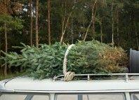Real vs. Artificial Christmas Trees | Earth911.com