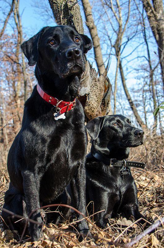 308 best Dogs images on Pinterest | Pit bull, Pitbull ...