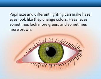 Example of a Human Eye Color Chart. You can view examples of common human eye colors in the following chart, along with some fun facts.
