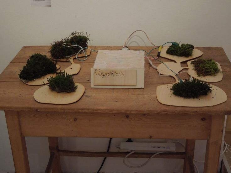 This noise-instrument was made from Lower Austrian Moss. Each of the three moss elements functions as variable resistor, that influences the sound in different ways. Depending on humidity the moss parts are able to conduct electric current with changing resistance, variegating their interactive quality.