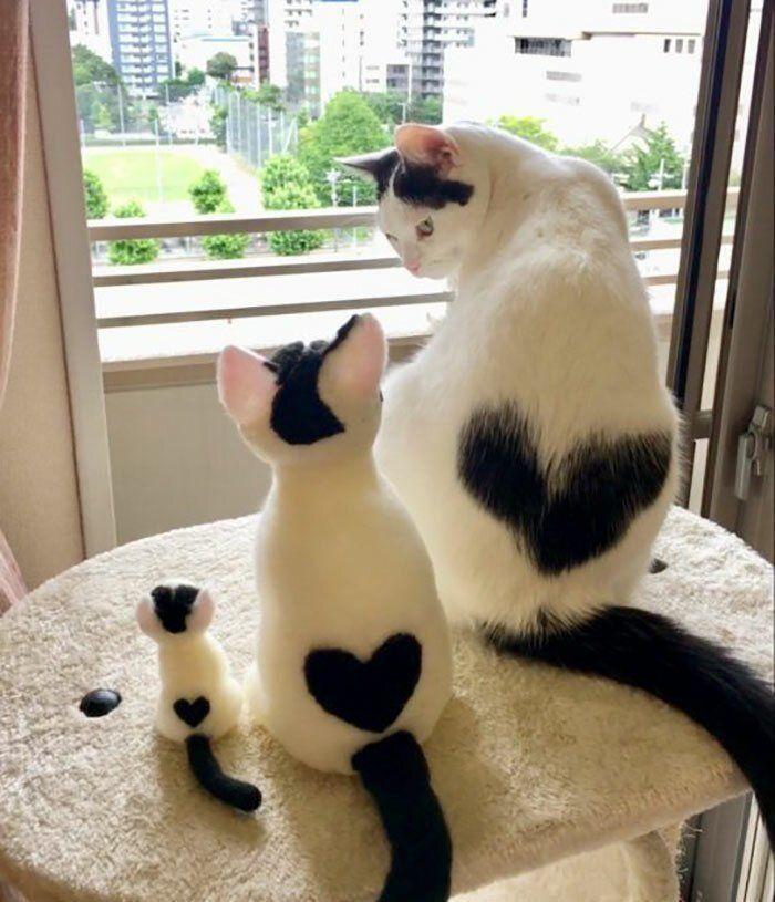 Первый месяц, картинки с добрым утром с котами веселые