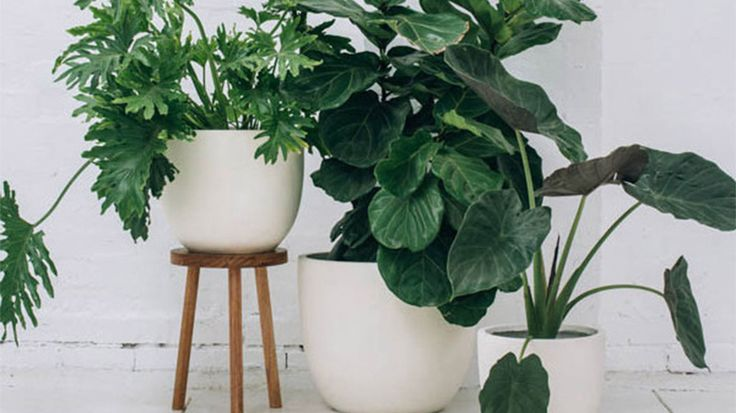 Play with height, texture, and colour with your plant arrangements.