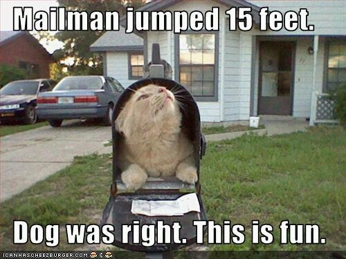 Scaring the postman is fun!: Funny Kitty, Funny Cat, Funny Pictures, Cat Jokes, Cat Mems, Crazy Cat, Cat Meme, So Funny, Silly Cat