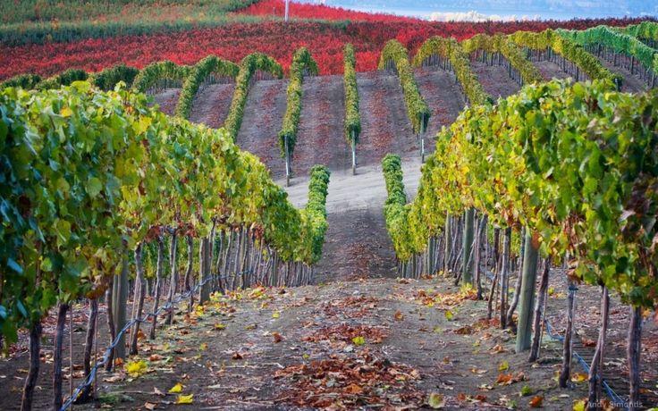 Best Vineyard Vines Wallpaper Pictures