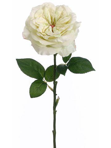 Pastel Lime English Rose | Pastel Wedding Flowers | Afloral.com