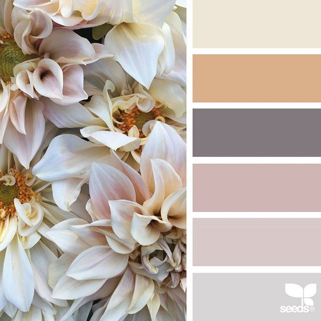 today's inspiration image for { petaled hues } is by @flowerwellny ... thank you, Jenny, for sharing your gorgeous photo in #SeedsColor !