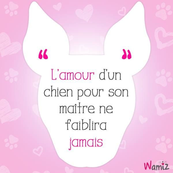 L'amour d'un chien pour son maître ne faiblira jamais ------- A dog will always love his human.