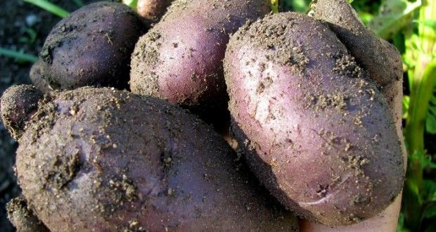 The five most important crops you need for survival. Off the grid news.