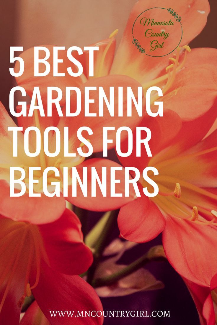 Top 5 Garden Tools for Beginners!