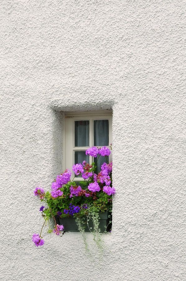 Narrow Window With Purple Geranium  by Jenny Rainbow