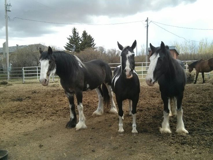 Diva, (clyde) Image, (paint) and Ava, (clyde) pic taken May 2, 2015. :-)