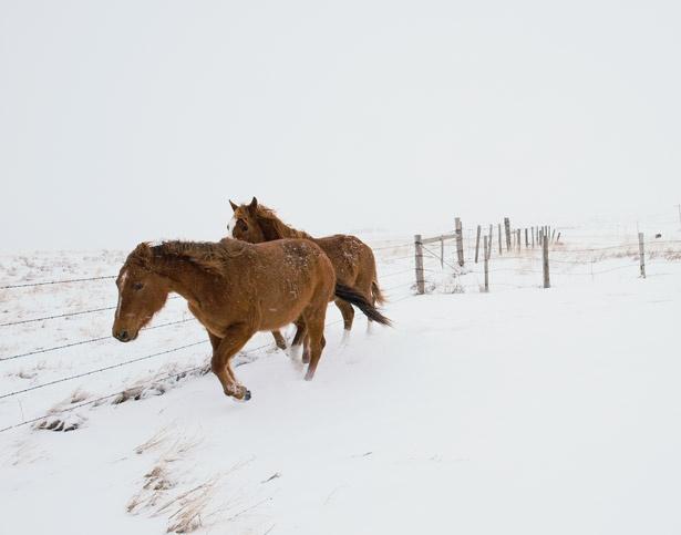 Montana: Geographic Photography, National Geographic Photos, Animal Pictures, Except, Montana, Williams Albert, Animal Wallpapers, Desktop Wallpapers, Albert Allard