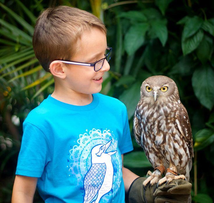 Kookahaha t-shirt capturing the laughter and beauty of the kookaburra's call. Oscar is holding a barking owl.