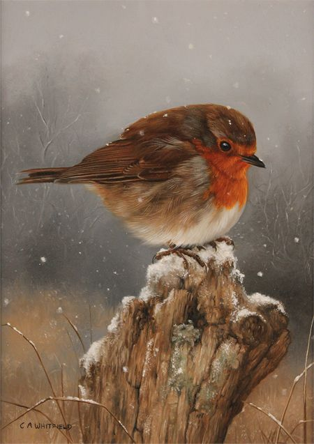 Carl Whitfield, Original oil painting on panel, Robin                                                                                                                                                                                 More