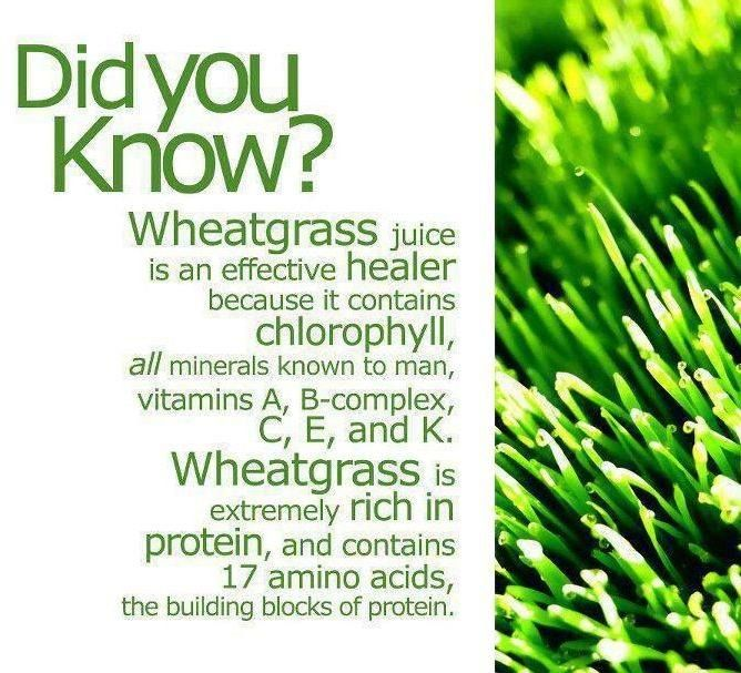 Wheatgrass Juice is a chlorophyll drink that contains a full spectrum of vitamins and minerals. How often do you enjoy it?