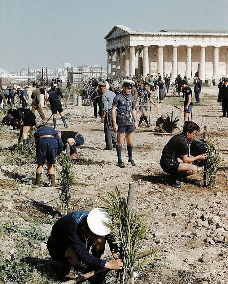 #Tbt to February 20, 1955 when the Boy Scouts and Sea Scouts of Athens and Attica planted oleanders in the area southwest of the Temple of Hephaistos, near the western entrance of our Agora excavations.