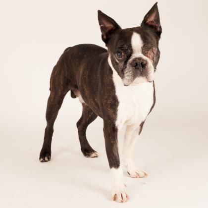 Jag  is available for adoption at our Mission campus!