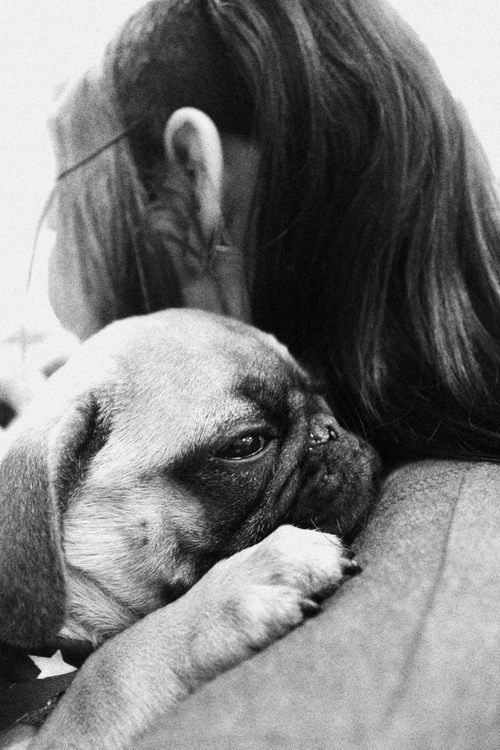 All pug owners know that face.  Its says i love you, i trust u and u keep me safe.  Nothing better than a pug hug....
