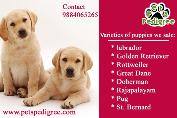Pets Pedigree In 2020 Pets Dogs Breeds Pet Puppy Rottweiler