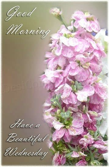The 25+ best Good morning beautiful flowers ideas on Pinterest ...