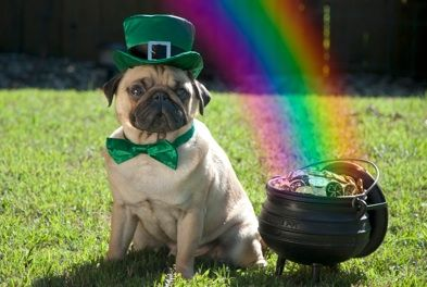 Luck of the (Irish): Lucky Charms, Dogs Cat, Rainbows, St. Patrick'S Day, Pugs In Costumes, Happy St., Lucky Pugs, Pugs Life, Animal